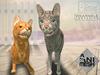 Companion Cat, tabby