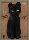 KittyCatS Box - Russian - Black - TEACUP - Odyssey Wonder
