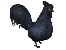 Schadenfreude Ayam Cemani Rooster Chicken!