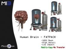 [MB3] Human Brain FATPACK