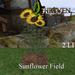 Sunflower%20field