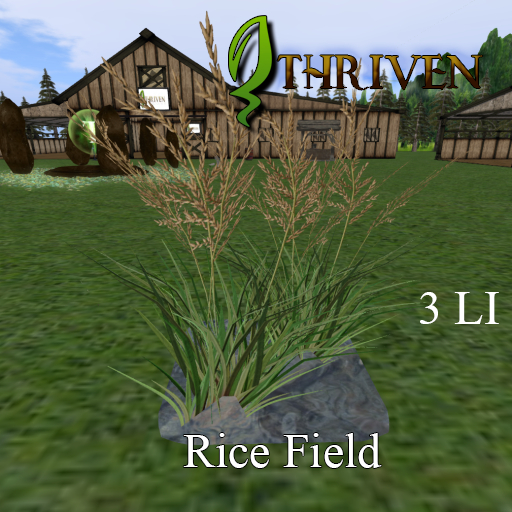 ThrivenRP Rice Field