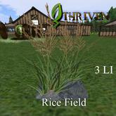 ThrivenRP Rice Field