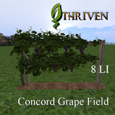 ThrivenRP Concord Grape Field