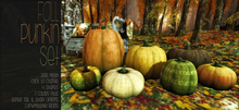 [QE] Home Collection -Fall Punkin Set-
