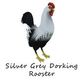 Barnyard Bird Nest Rooster, Silver Grey Dorking, Eye: Flags of the World - Yemen, Beak Flaw Speckled Light, Wing: Gold