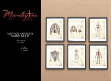Moonley Inc. - Vintage Anatomy Frame Set C