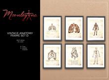 Moonley Inc. - Vintage Anatomy Frame Set D