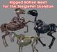 SNODE - TPet Skele Rotten Meat
