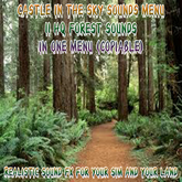 # Sounds Forest FULL PERM