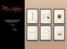 Moonley Inc. - Vintage Anatomy Frame Set A