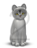 KittyCatS Box - 1T-M Aby Black Silver - Normal - Natural/Genesis
