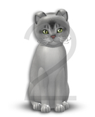 KittyCatS Box - 8T-M Aby Black Silver - Normal - Glitter/Curious