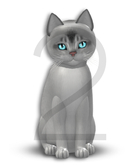 KittyCatS Box - 9T-F Aby Black Silver - Normal - Illume/Boo Boo