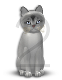 KittyCatS Box - 9T-M Aby Black Silver - Normal - Blush/Swanky