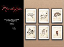 Moonley Inc. - Vintage Anatomy Frame Set H