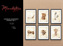 Moonley Inc. - Vintage Anatomy Frame Set I