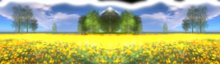 *~* Y's Art&Poses - Panorama yellow flowers