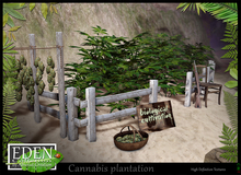 (*.*) EDEN Cannabis Plantation