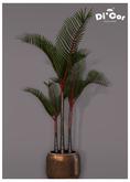 Di'Cor Bonsai Palm Plant