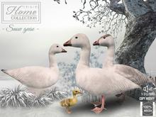 Snow Goose, Geese