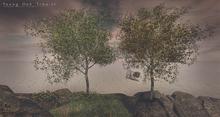 LB Young Oak Tree v2 Animated 4 Seasons