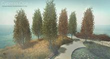 LB Cypress Oak v1 Animated 4 Seasons