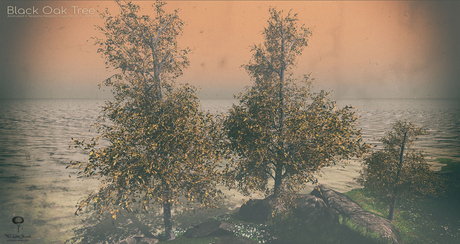 LB Black Oak Tree Animated 4 Seasons