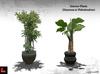 Modern Interior Plants - Dracaena V.02 &Philodendron Plant Copy/Modify