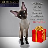 Siamese Cat Animated