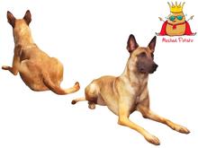 Meshed Potato - Belgian Malinois Dog - Full Perm Mesh