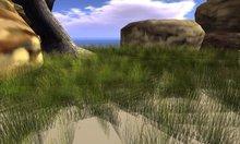 Long Grass Field