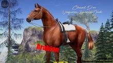 Cheval D'or / TeeglePet Arabian / Vaquero Spanish Tack Set.