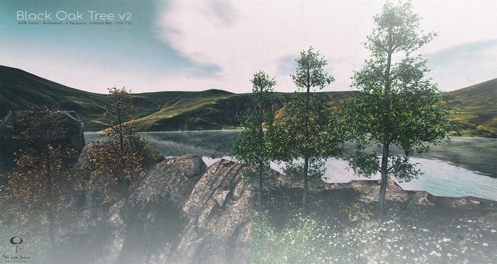 LB Black Oak Tree v2 Animated 4 Seasons