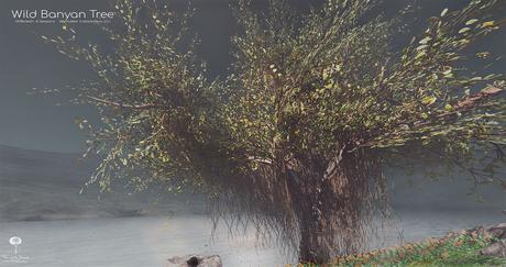 LB Wild Banyan Tree Animated 4 Seasons