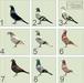 Pigeon%20texture%20variants