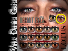 LOTUS. Hermit Eyes 17 RARE