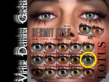 LOTUS. Hermit Eyes 10 BOX
