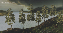 LB Wild Pine Tree Animated 4 Seasons