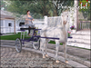 ME_Pony Rebel Connemara