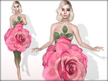 Boudoir-Rose