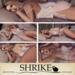 Shrike%20 %20nap%20time%20%20 %20couples%20pose