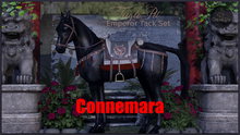 Cheval D'or / TeeglePet Connemara / Emperor Tackset.