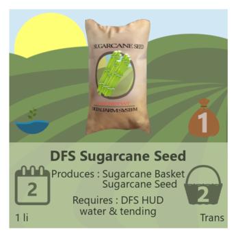 DFS Sugarcane Seed