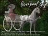 ME_Liverpool Gig TePet Arabian White