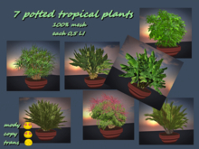 Potted plants Tropical *Box*