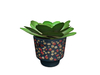Potted%20plant%20succulent%20in%20sixties%20pot