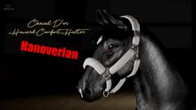 Cheval D'or / TeeglePet Hanoverian / Howard Comfort Halter.