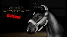 Cheval D'or / TeeglePet Unicorn / Howard Comfort Halter.