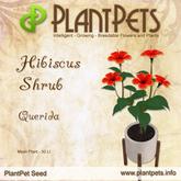 PlantPet Seed [Hibiscus Shrub *Querida*]